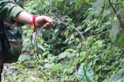 猎杀国家一级保护野生动物白鹤和西藏自治区二级保护