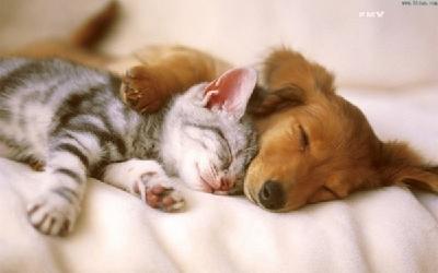 盘点动物有爱的幸福瞬间-中国搜索图片频道